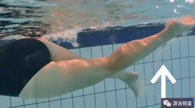 自由泳鞭腿技术速成学习经验分享